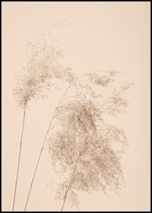Reed Grass Plakat