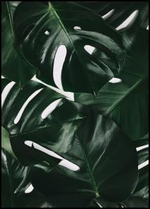 Monstera Plant I Plakat