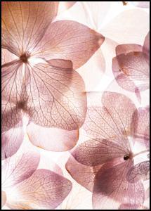 Orchid Plakat