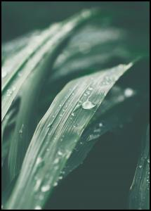 Waterdrop Plakat