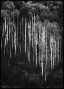 Forest Art Plakat