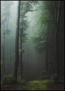 Mysterious forest Plakat