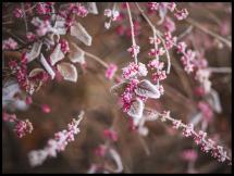 Blomst Nærbillede Plakat