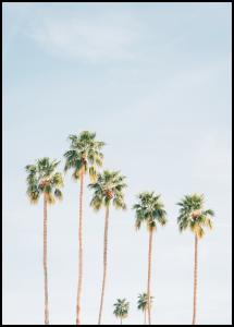 Palm Trees Plakat