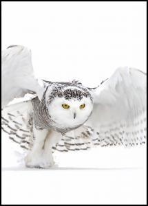 Snowy Owl Jazz Wings Plakat