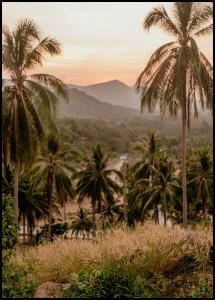 Palm Trees On Mountain Plakat