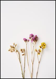 Dried flowers I Plakat