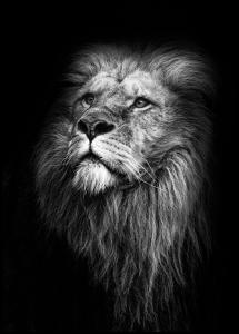 King Of Lions Plakat