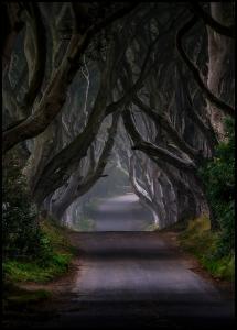 The Dark Hedges Magic road Plakat