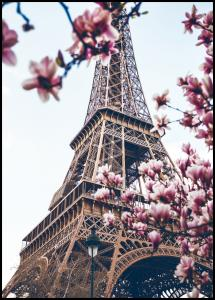 Eiffel Tower Blossoms Plakat