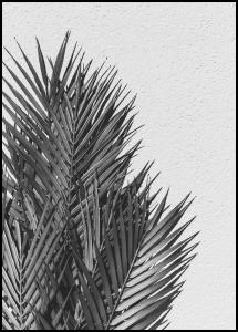 Palm Leaves Plakat