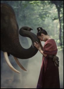 Respect the elephant Plakat