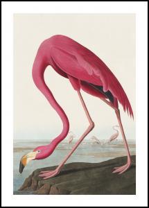 American Flamingo Plakat