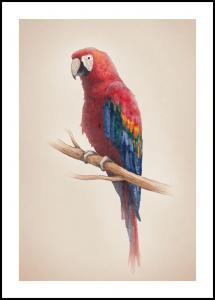 Tropical Parrot Plakat