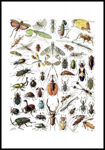 Skole - Insekter II Plakat
