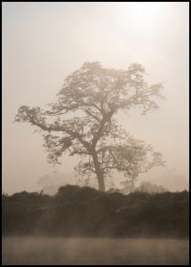 Misty Tree Plakat