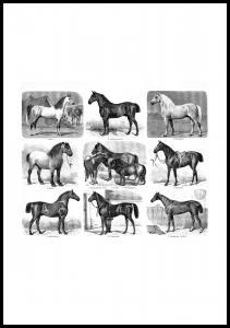 Hestevæddeløb Plakat