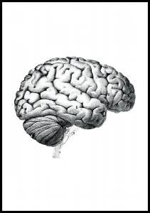 Skole - Hjernens dele Plakat