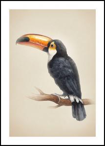 Tropical Toucan Plakat