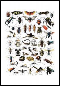 Skole - Insekter I Plakat