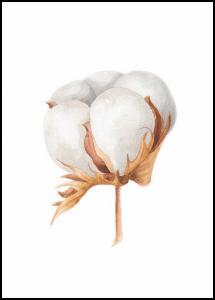 Cotton Flower Plakat