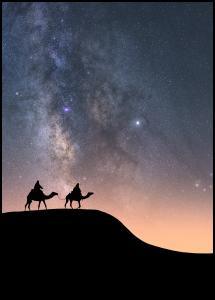 Camels Under The Stars Plakat