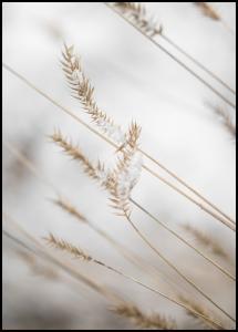 Swaying Reed I Plakat