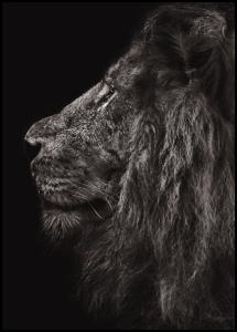 Lion In Profile Plakat