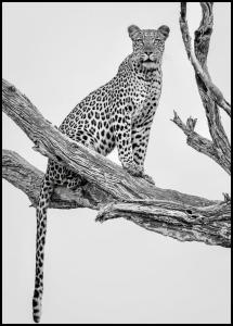 Leopard Portrait Plakat
