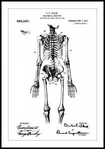 Patenttegning - Anatomisk Skelet I Plakat
