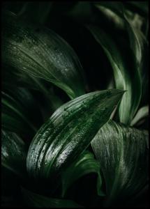 Plant Plakat