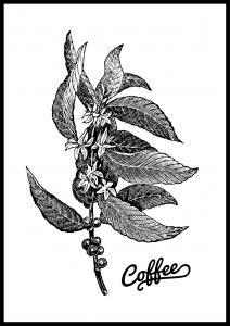 Coffee Botanical Plakat