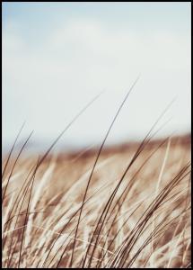 Dreamy Grass Plakat